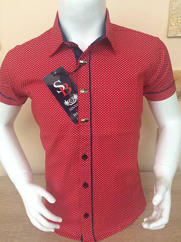 Детская рубашка с коротким рукавом Sinyor Besni 1-5, фото 2