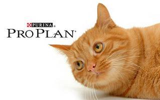 Корм Pro Plan для кошек
