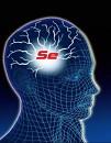 Селен (Se) в организме : молодость, активность, продуктивность.