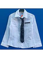 Рубашка белая с галстуком для девочки 116-122