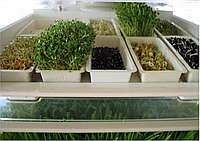 Лоток для семян Junior для проращивателя  спроутера микрофермы EasyGreen