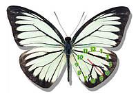 Бабочка - часы настенные фигурные 30*45 см 5