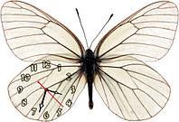 Бабочка - часы настенные фигурные 30*45 см 4