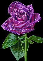 Схема для вышивки бисером POINT ART Роза, размер 30х42 см