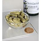 Swanson Premium Damiana АФРОДИЗІАК листя Даміани 510 мг 100 капс, фото 2