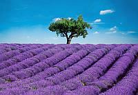 Фотообои: Французский Прованс, 366х254 см