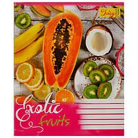 Тетрадь 48 листов клетка Exotic Frutis