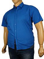 Мужская рубашка большого размера Negredo 0295 стрейч