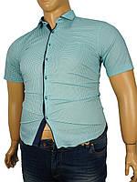 Рубашка мужска Negredo 1039#08 В мятного цвета