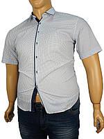 Рубашка  Negredo 1039#10 В белая в клетку