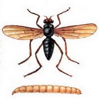 Инсектициды и акарициды