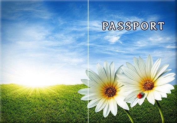 Обложка обкладинка на паспорт природа ромашки України Украина Pasport
