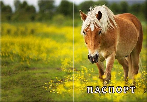 Обложка обкладинка на паспорт Лошадь Кінь України Украина Pasport