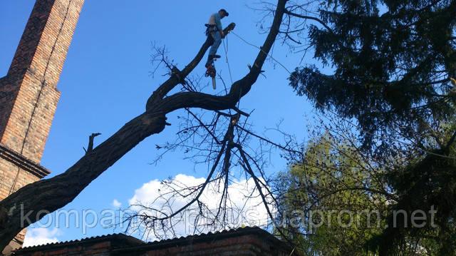 Удаление деревьев с участка, удаление деревьев с автовышки, удаление мха с деревьев, удаление крон с деревьев, удаление деревьев на участке, удаление деревьев на кладбище, удалить дерево на кладбище, удаление сухих деревьев, удаление старых деревьев, удаление сложных деревьев, очистка участка от деревьев