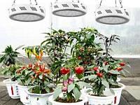 Фитопанель для выращивания растений 135W (10 полных спектров)