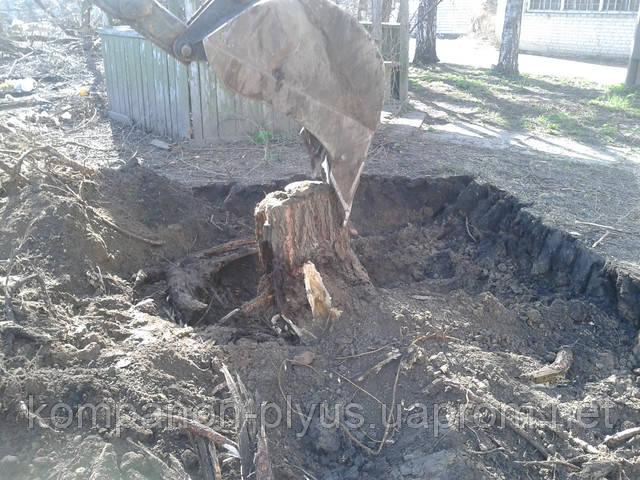 Спилить дерево Киев. Срезать дерево, выкорчевать пень. Вывезти листья и ветки.