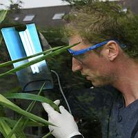 Ультрафиолет для растений.