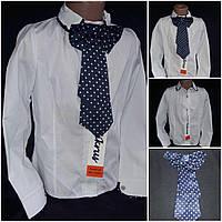 Девичья блуза с галстуком  в школу (на поплине), рост 116-146 см., 185