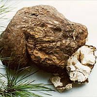 Гриб пория  / (Poria) детокс, снижение веса