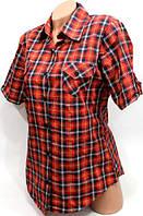 Блуза котон Турция размер 46,48,50