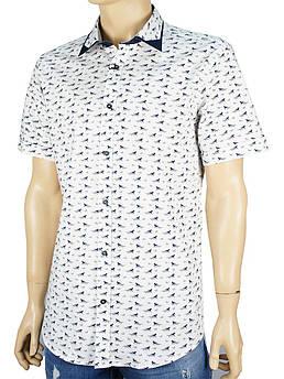 Чоловіча сорочка Jack Polo 50-2 GAR 9015 білого кольору