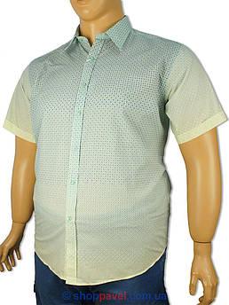 Чоловіча сорочка Barcotti 0150-04