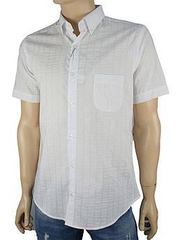 Чоловіча сорочка Love Man 0270 марл.