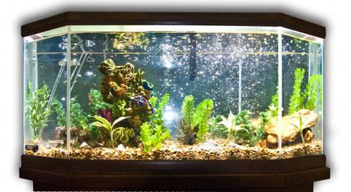 Установка и заполнение аквариума.