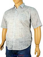Чоловіча сорочка Micele Placido 0310 B великих розмірів