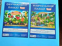 Плакаты обучающие для детей
