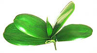 Листья фаленопсиса искусственные 27 см
