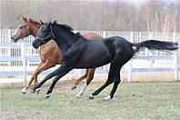 Мюсли Golden Horseshoe Лечебно-профилактический для ослабленных лошадей 20кг