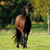 Меш Golden Horseshoe Медовый 20кг
