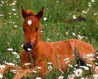 Мюсли Golden Horseshoe Юниор для жеребят 12 - 24 мес. 20кг