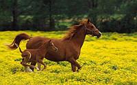 Мюсли Golden Horseshoe Юниор для жеребят 6 - 12 мес. 20кг