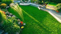 Мшанка шиловидная, мох ирландский(10х10 см-10 грн)газонная трава,растения для альпинария,садовые цветы