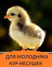 Корми для курчат