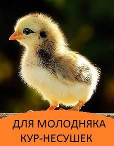 Корма для цыплят