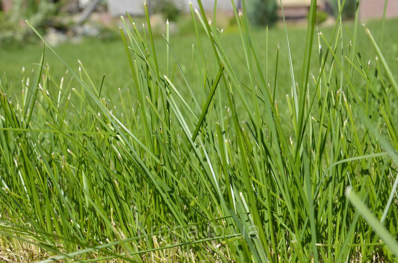 Скосить траву