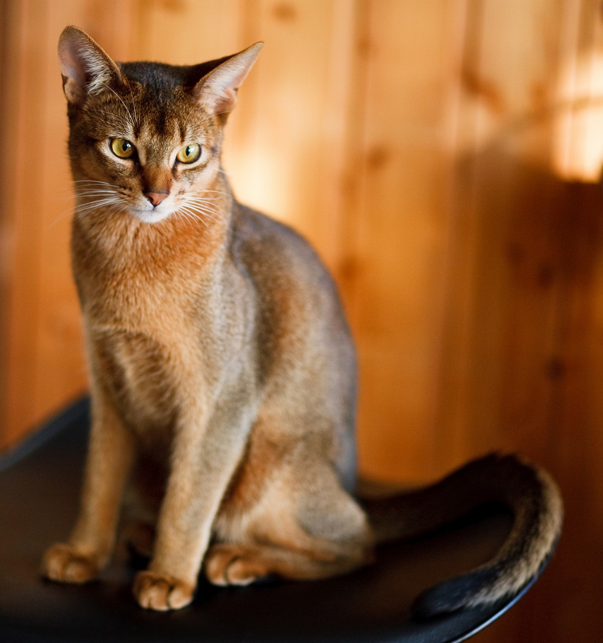 Фотообои: Ласковый кот