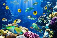 Фотообои: Подводный мир