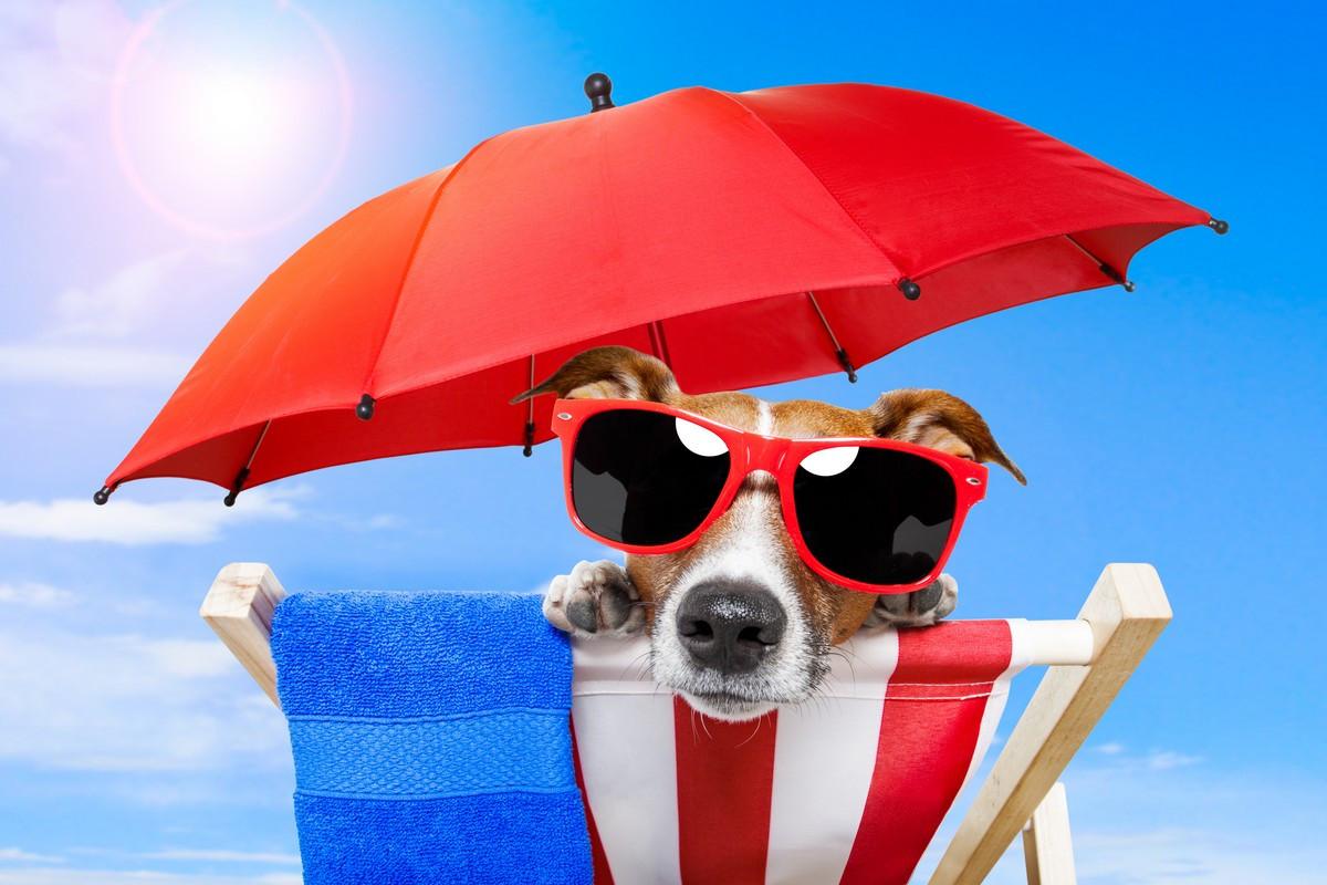 Фотообои: Собака на отдыхе