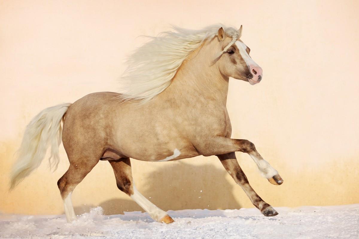 Фотообои: Красивая лошадь