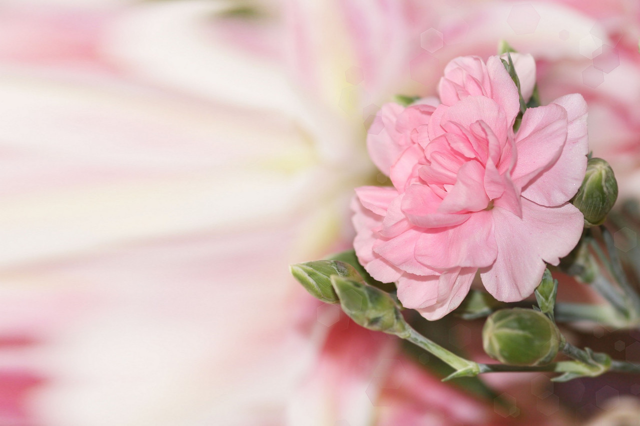Фотообои: Изысканный цветок