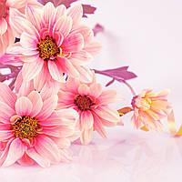 Фотообои: Яркий цвет