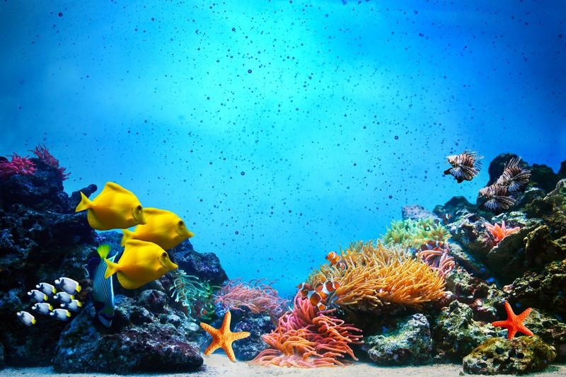 Фотообои Желтые рыбки