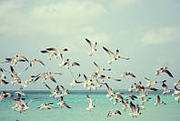 Фотообои Чайки