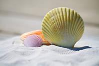 Фотообои Раковины моллюсков