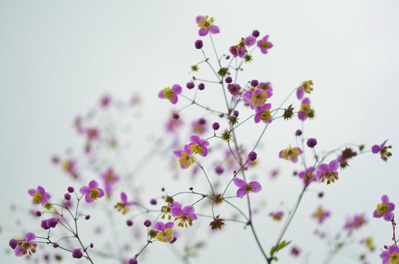 Фотообои Фиолетовые цветки