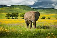 Фотообои Слон в цветущем поле